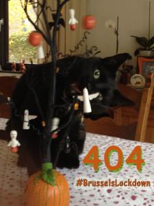 Halloween: un chat joue avec une décoration